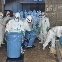 Prefectural government officials enter a poultry farm Tuesday to cull chickens in Nobeoka, Miyazaki Prefecture, where an outbreak of bird flu was confirmed earlier in the day. | MIYAZAKI PREFECTURE/KYODO