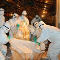 Officials prepare to dispose of slaughtered chickens at a poultry farm in the city of Miyazaki where the highly pathogenic H5 strain of bird flu was detected. | KYODO
