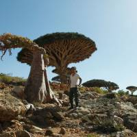 Seijun Nishihata stands next to a dragon blood tree in the Socotra Islands in Yemen in February 2011. 