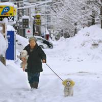 A woman takes her dog for a snowy stroll in the city of Aomori on Saturday. | KYODO