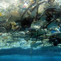 Plastic debris damages marine environment