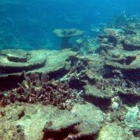 A photo released by the Australian Institute of Marine Science Long-Term Monitoring Team in October 2012 shows damage at a section of Australia's Great Barrier Reef, which has lost more than half its coral cover in the past 27 years. | AFP-JIJI