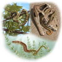 This illustration based on the oldest-known snake fossils shows Portugalophis lignites in a ginkgo tree, Diablophis gilmorei hiding in a ceratosaur skull and Parviraptor estesi swimming in a lake.   REUTERS