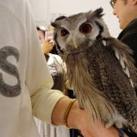 It's a hoot hanging out with owls at this Tokyo cafe