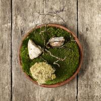 Nature's pantry: A dish of edible reindeer moss with powdered cep mushrooms is one of Danish chef Rene Redzepi's creations. | MIKKEL HERIBA