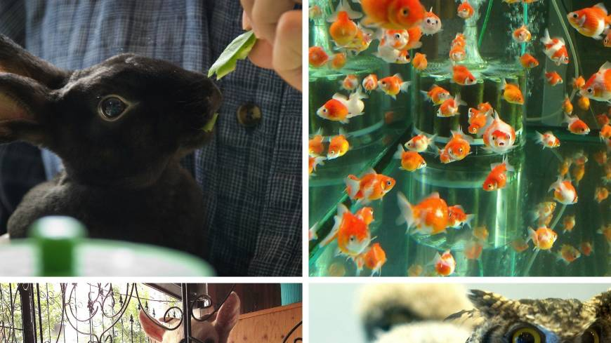 Tokyo's menagerie of pet cafes