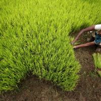 Modi bets on GM crops to feed India