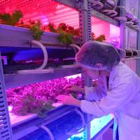 Farmers see growth potential for 'functional' vegetables