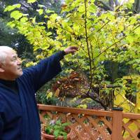 Itsuki Murota, chief priest of Iwaya Shrine and principal of the nursery school it runs, explains about the trees in the school's yard in November. | KYODO