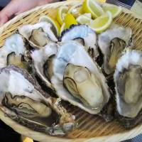 Top-grade oysters from Hiroshima Prefecture are displayed in a tray. The planned relocation of a floating oyster restaurant in the city of Hiroshima to an area neighboring the Atomic Bomb Dome has met with opposition from some residents, who say a bustling eatery could disturb visitors offering a prayer for peace. | KYODO