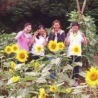 Sunflowers sew grass-roots exchanges with Fukushima