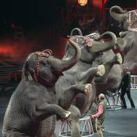 Ringling Bros. to phase out elephants from circus acts