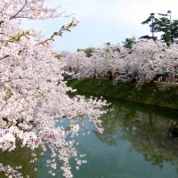 Prime hanami (cherry blossom viewing) spots in Japan