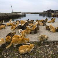 Cats crowd the harbor embankment on Aoshima Island in Ehime Prefecture on Feb. 25. | REUTERS