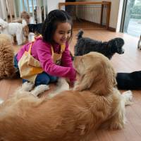 Rino Kakinuma, 7, plays with toy poodles, beagles and a golden retriever at the Dog Heart cafe in Tokyo on Feb. 22. | AFP-JIJI