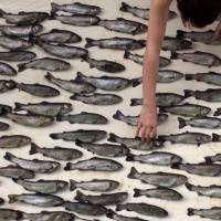'100 Fish, or Before and After Epicure' | MASARU IWAI