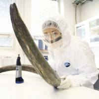 DNA decoded, mammoths face hairy question of whether they could be revived