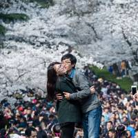 Cherry blossoms focus of three-nation tug-of-war over origins