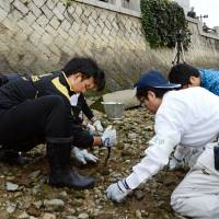 Hiroshima University students retrieve A-bomb debris from the Motoyasu River near the Hiroshima Commercial Exhibition Hall on Sunday, the 100th anniversary of the completion of the building. It is now known as both the Hiroshima Peace Memorial and the Atomic Bomb Dome. | KYODO