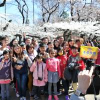 Taiwanese tourists pose for photos under cherry blossoms in Tokyo's Ueno Park late last month. | YOSHIAKI MIURA