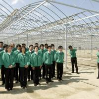 New employees of Michisaki Corp., in Sendai's Miyagino Ward, gather in front of greenhouses that are under construction, in April 2013. The firm now grows fruit and vegetables in the greenhouses using hydroponic methods. | KYODO