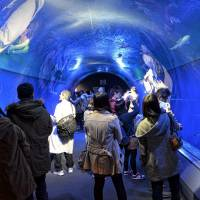Tunnel of water in the ring of fire: Visitors watch all manner of sea creatures at the Osaka Aquarium Kaiyukan. | JASON JENKINS