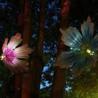 Electric works: Marleen Maathuis and Tim van Cromvoirt will go natural with 'Bloom' at Roppongi Art Night. | MARLEEN MAATHUIS