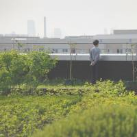 A man looks out over Seoul from the verdant roof of the Garden 5 shopping mall. | AFP-JIJI