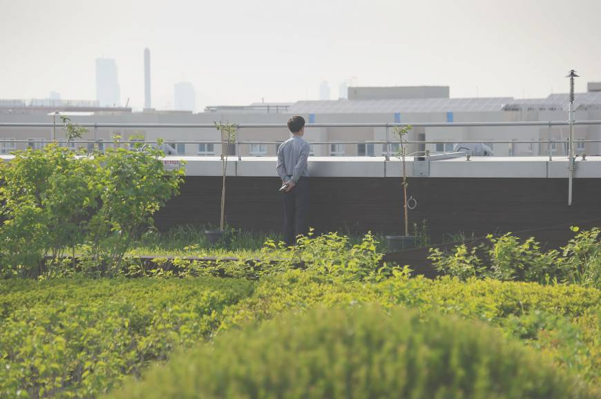Seoul's rooftop gardens are oases in busy capital