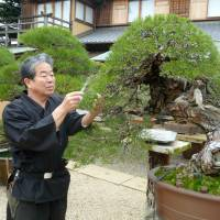 Japan rediscovers joy of bonsai after tiny trees put down roots in global affections