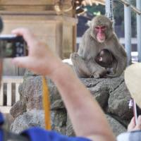 Visitors to Oita Zoo snap a shot of its most famous occupant: a monkey still named Charlotte.  | KYODO