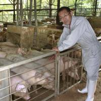 Masami Kitagawa, owner of Kitagawa Farm in the city of Shizuoka, shows off his pigs, which drink green tea instead of water. | KYODO
