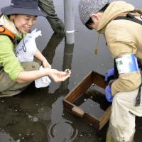 Chiba wetland gives city slickers rare chance to enjoy nature's bounty