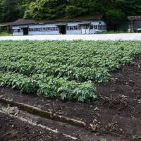 How does your garden grow?: The vegetable garden at Tama Juvenile Training School. | SATOKO KAWASAKI