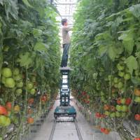 Vegetable factories may enable efficient food production in urban areas.   CHIBA UNIVERSITY