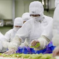 Workers on a sandwich production line place ingredients at a Prime Delica Co. factory in Ibaraki Prefecture in 2013. The facility makes food for 7-Eleven stores operated by Seven & I Holdings Co.   BLOOMBERG