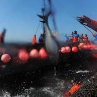 Fishermen haul out tuna during the 'Almadraba' (fishing of the tuna) in Barbate, southern Spain, on Sunday. | AFP-JIJI