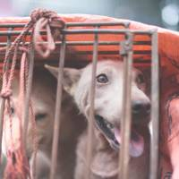 Chinese woman pays to rescue 100 dogs from meat festival: report