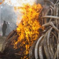 China hints it will end ivory trade