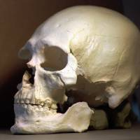 8,500-year-old 'Kennewick Man' skeleton was likely Native American, not Ainu, DNA findings indicate