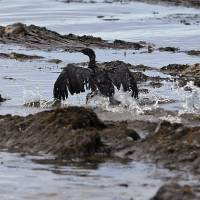 Oil spill 'extremely unlikely': Ill-fated pipeline firm to California