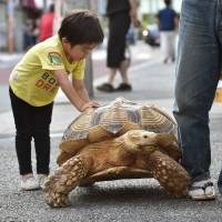 A child plays Wednesday with Bon-chan while out walking with his owner Hisao Mitani on a street in Tsukishima, Tokyo. | AFP-JIJI