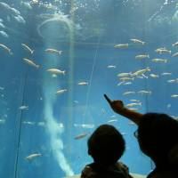 Visitors to Tokyo Sea Life Park in Edogawa Ward view a vast, doughnut-shaped tank without tuna last month. | KYODO