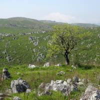 As far as the eye can see: Akiyoshi Plateau's terrain, once a former coral reef, is now a treeless field of limestone. | MANDY BARTOK
