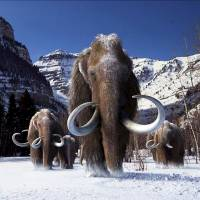 Genome study reveals how the woolly mammoth thrived in the cold