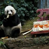 Hong Kong giant panda becomes oldest ever
