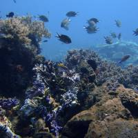 A coral reef is seen in the waters of Tatawa Besar, in Indonesia's Komodo Islands, in April 2009. Rising demand for copper, cobalt, gold and the rare earth elements vital for the manufacture of smartphones and other high-tech products has led to a prospecting rush thousands of meters beneath the waves. | AP