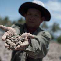 A Thai farmer shows the dried out soil July 2 from his field, which usually yields a crop, in Bang Pla Ma district, Suphanburi province, a two-hour drive north of Bangkok. Thailand's vital rice belt is being battered by one of the worst droughts in living memory, forcing impoverished farmers deeper into debt and heaping fresh pain on an already weak economy  seen as the junta's Achilles heel. | AFP-JIJI