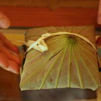 Hasu-no-ii, rice cakes wrapped in lotus leaf, are prepared by Keiko Uchida, who says they are for 'Buddha who visits our home altars during Obon.'   KIT NAGAMURA
