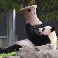 Washington zoo says panda's hormones rising, indicating possible pregnancy